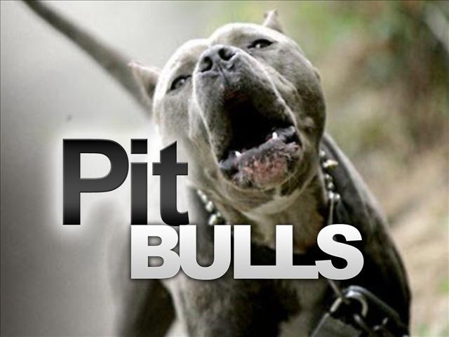 Police hunt killer dogs in Sale West