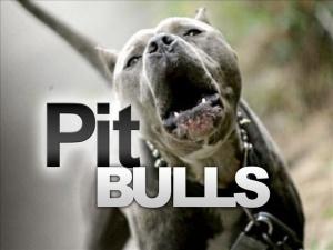 pit-bull-jpg